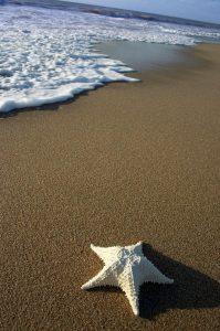 sjöstjärna på land