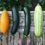 zucchini-2611507__340