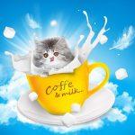 cat-1027486__340